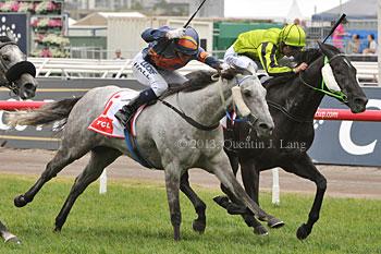 Black Cash Wins The Greys Race