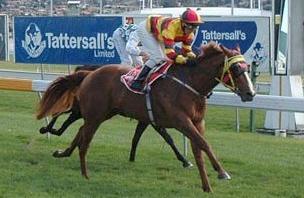 Tasmanian racing