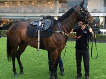 The Chris Waller-trained champion mare Winx